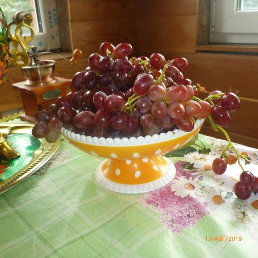 Виноград г.ф. Пёстрый. Ранний, очень мускатный, урожайный, устойчивость хорошая. Осы интересуются в меру.